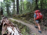 Tramping through beautiful native forest