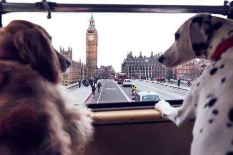 s3-news-tmp-118579-dog_bus_2--default--1200